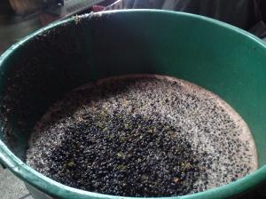 Zgniecione winogrona